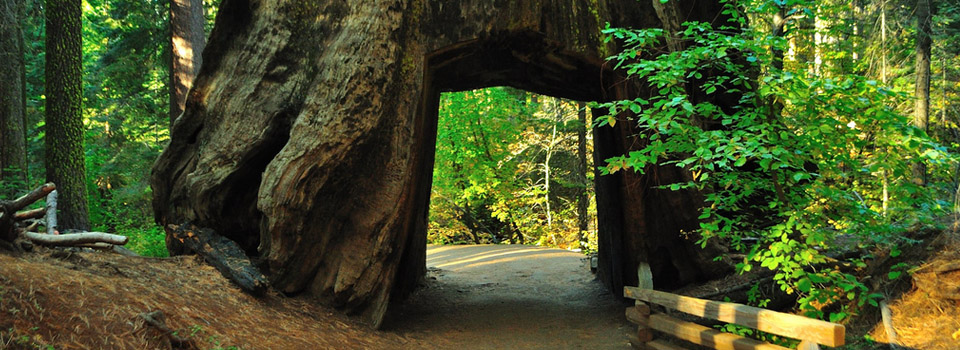 yosemite-tuolume-tunnel-tree-slider