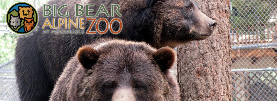 bb-moonridge-zoo-bears-logo-slider