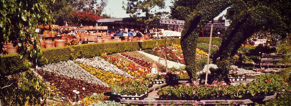 rogers-gardens-dolphin-plants-slider